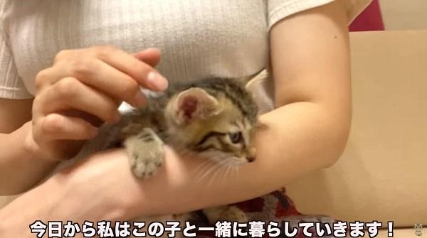 自慢の胸と捨て猫を強調すれば儲かるやろな~。→炎上→即引退→猫殺処分を匂わせる。電通案件かwしかも苦手民…